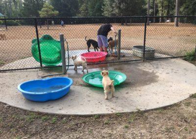 dog+park